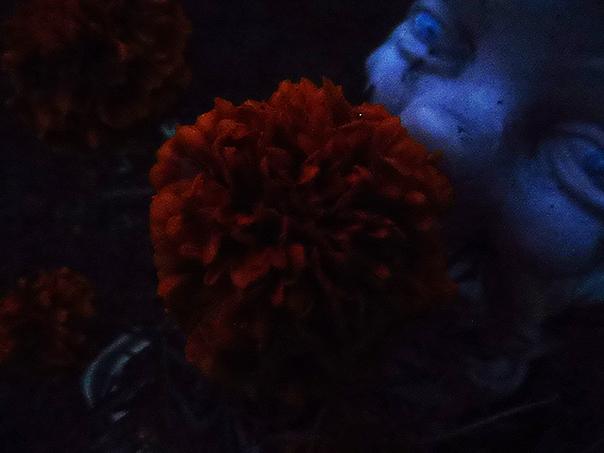 Na sam koniec, nie wiadomo dlaczego i po co, jakiś kwiatek i psychopatyczny krasnal.